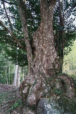 かごの木2